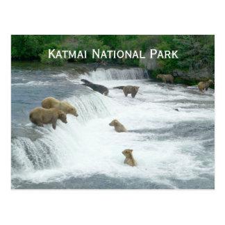 Brown Bears Fishng at Katmai NP Postcard Postcards