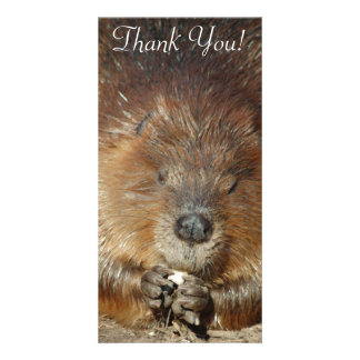 Brown Beaver Nibbles Food From Cute Little Paws Picture Card