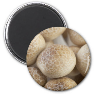 Brown Beech Mushrooms 2 Inch Round Magnet