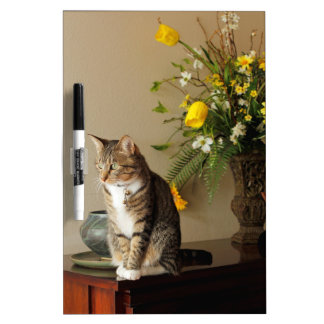 Brown black Tabby cat Sitting on piano flowers Dry Erase Whiteboard