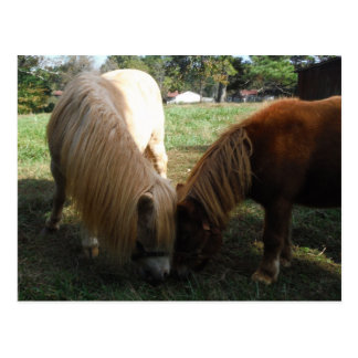 Brown Blond Miniature Horses Two Little Ponies Post Card