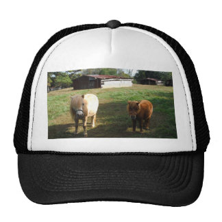 "Brown Blond, Two Miniature Horses, ""Little Pony "" Trucker Hat"