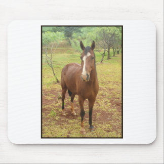 Brown brazilian horse mouse pad