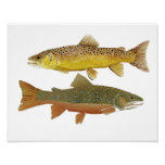 Brown & Brook Trout Study Poster