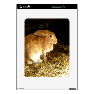 Brown Bunny Decal For The iPad