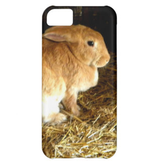Brown Bunny iPhone 5C Cover