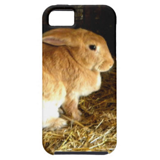 Brown Bunny iPhone SE/5/5s Case