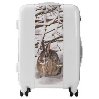 Brown Bunny Rabbit Seeking Shelter Luggage