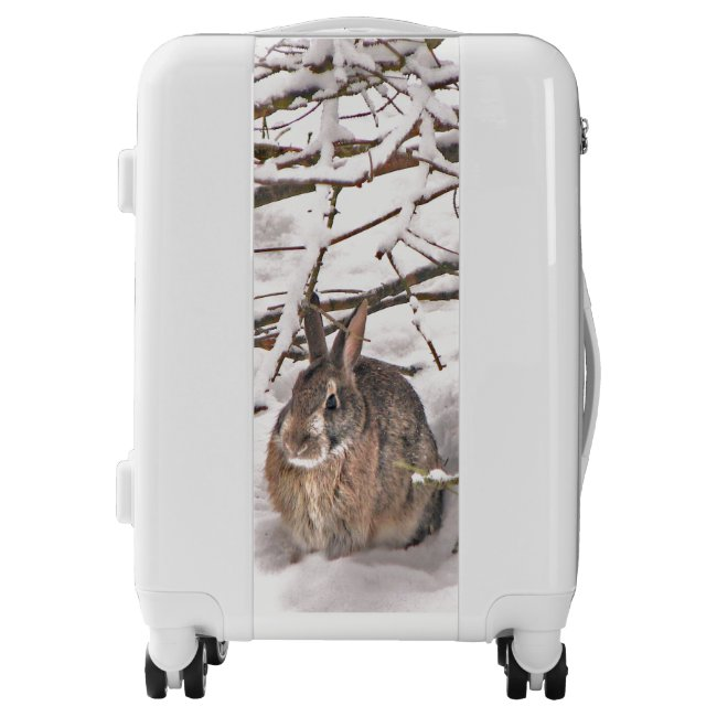 Brown Bunny Rabbit Seeking Shelter Luggage