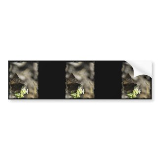Brown Butterfly Bumper Stickers