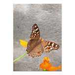 Brown Butterfly Card