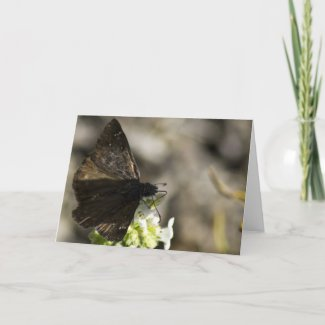 Brown Butterfly Greeting Cards