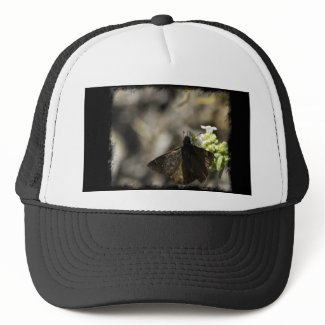 Brown Butterfly Mesh Hats