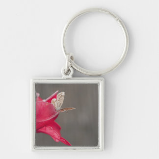 Brown butterfly on a pink flower petal key chains