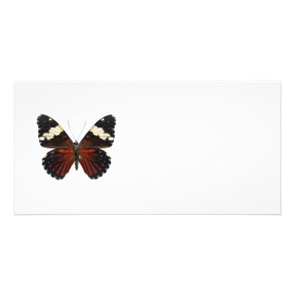 Brown butterfly on any color card