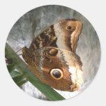 Brown Butterfly Round Sticker