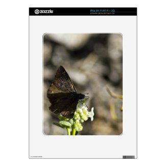 Brown Butterfly Skins For Ipad