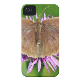 Brown Butterfy en la flor iPhone 4 Carcasas