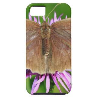 Brown Butterfy en la flor iPhone 5 Carcasas
