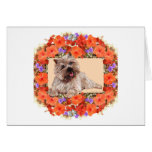 Brown Cairn Terrier in Floral Cards
