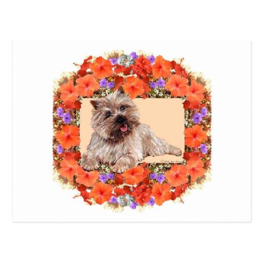 Brown Cairn Terrier in Floral Postcards