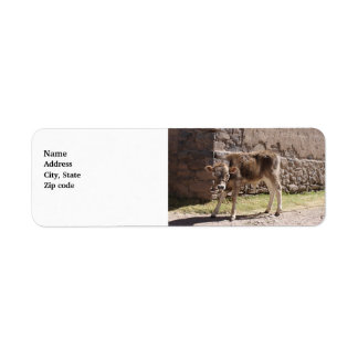Brown Calf - Brown Baby Cow Standing Label