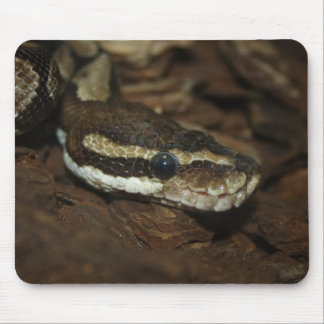 Brown Carpet Python Mouse Pad