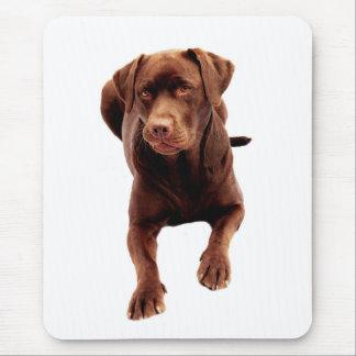 Brown Chocolate Labrador Retriever Dog  Mousepad