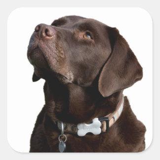 Brown Chocolate Labrador Retriever Puppy Dog Square Sticker