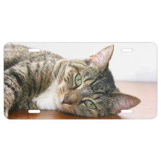 Brown con la cara blanca del gato de tabby placa de matrícula