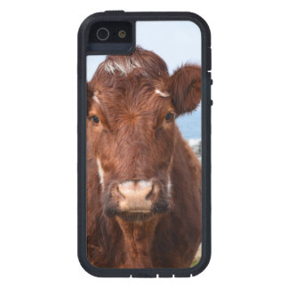 Brown Cow Cover For iPhone 5
