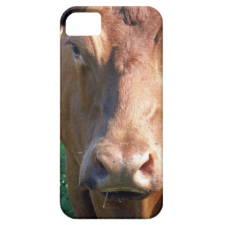 Brown Cow Face, iPhone SE/5/5s Case