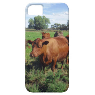 Brown Cow Field, iPhone SE/5/5s Case