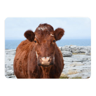Brown Cow Announcement