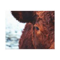 Brown cow portrait canvas print