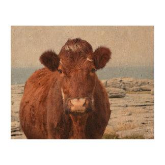 Brown Cow Queork Photo Print