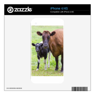 Brown cow together with black and white calf decals for iPhone 4
