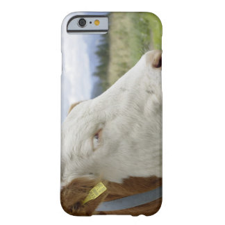 Brown cow with a sign in it s ear on a feedlot iPhone 6 case