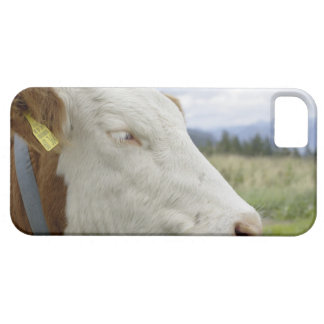 Brown cow with a sign in it s ear on a feedlot iPhone 5 cases