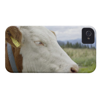 Brown cow with a sign in it s ear on a feedlot iPhone 4 Case-Mate case