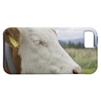 Brown cow with a sign in it?s ear on a feedlot, iPhone SE/5/5s case