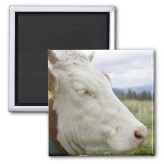 Brown cow with a sign in it s ear on a feedlot refrigerator magnets