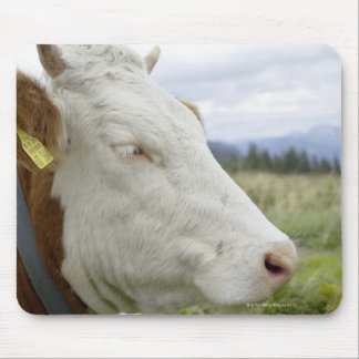 Brown cow with a sign in it?s ear on a feedlot, mouse pad
