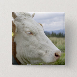 Brown cow with a sign in it?s ear on a feedlot, pinback button