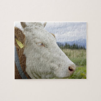Brown cow with a sign in it s ear on a feedlot jigsaw puzzle