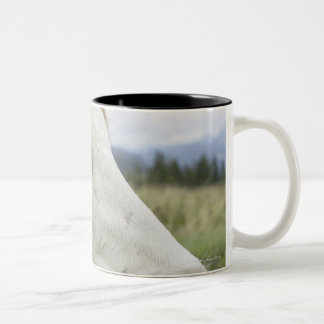 Brown cow with a sign in it?s ear on a feedlot, Two-Tone coffee mug