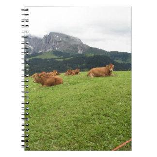 Brown cows on alpine pastures in summer spiral notebook