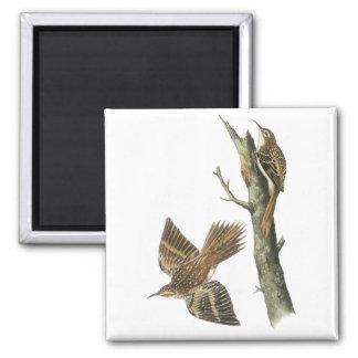Brown Creeper, John Audubon Magnet