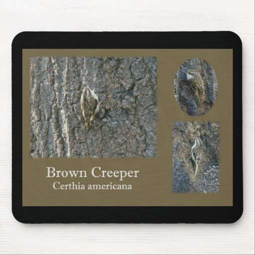Brown Creeper Songbird Coordinating Items Mouse Pads