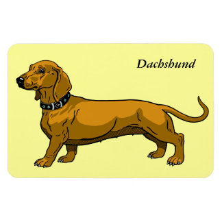 brown dachshund magnet